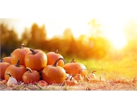 Autumn image of pumpkins